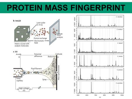 PROTEIN MASS FINGERPRINT. DNA/RNA MASS FINGERPRINT.