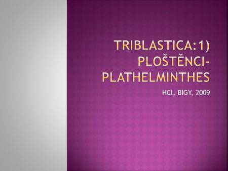 Triblastica:1) Ploštěnci- Plathelminthes