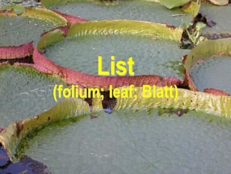 List (folium; leaf; Blatt)