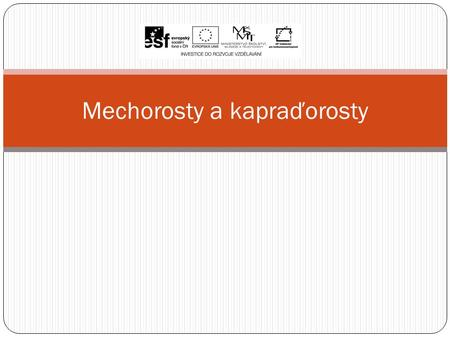 Mechorosty a kapraďorosty