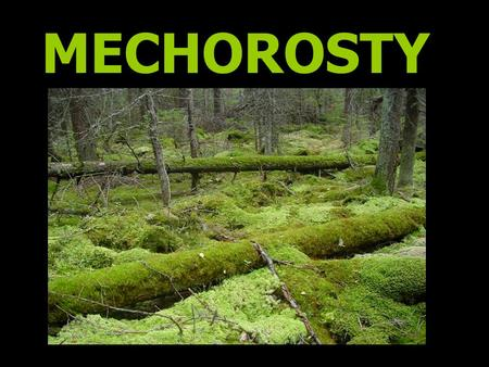 MECHOROSTY.