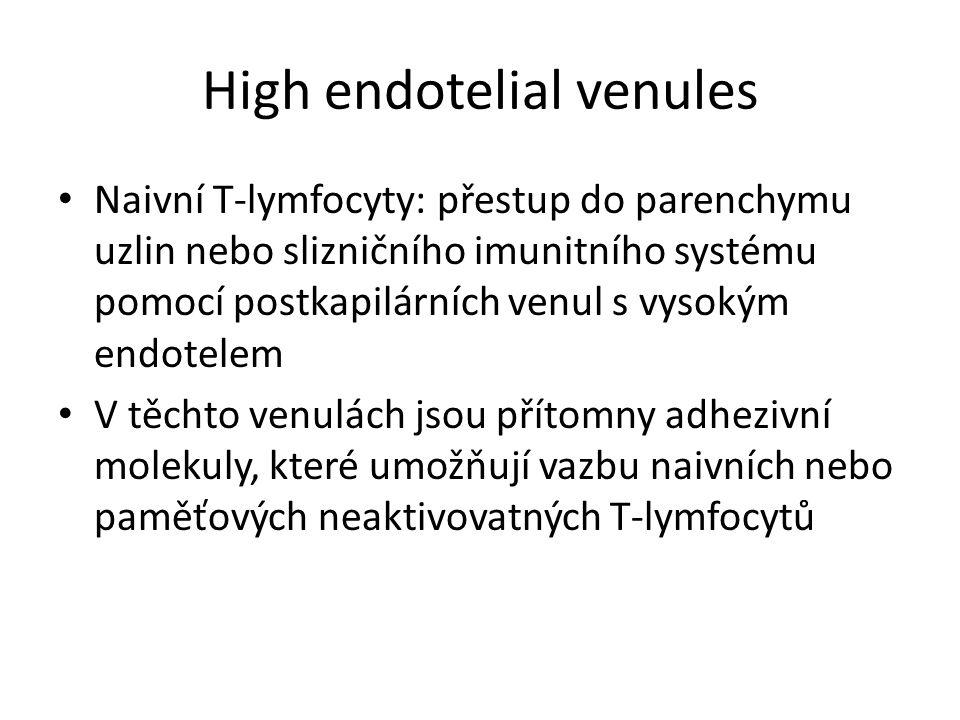 Cirkulace lymfocytů