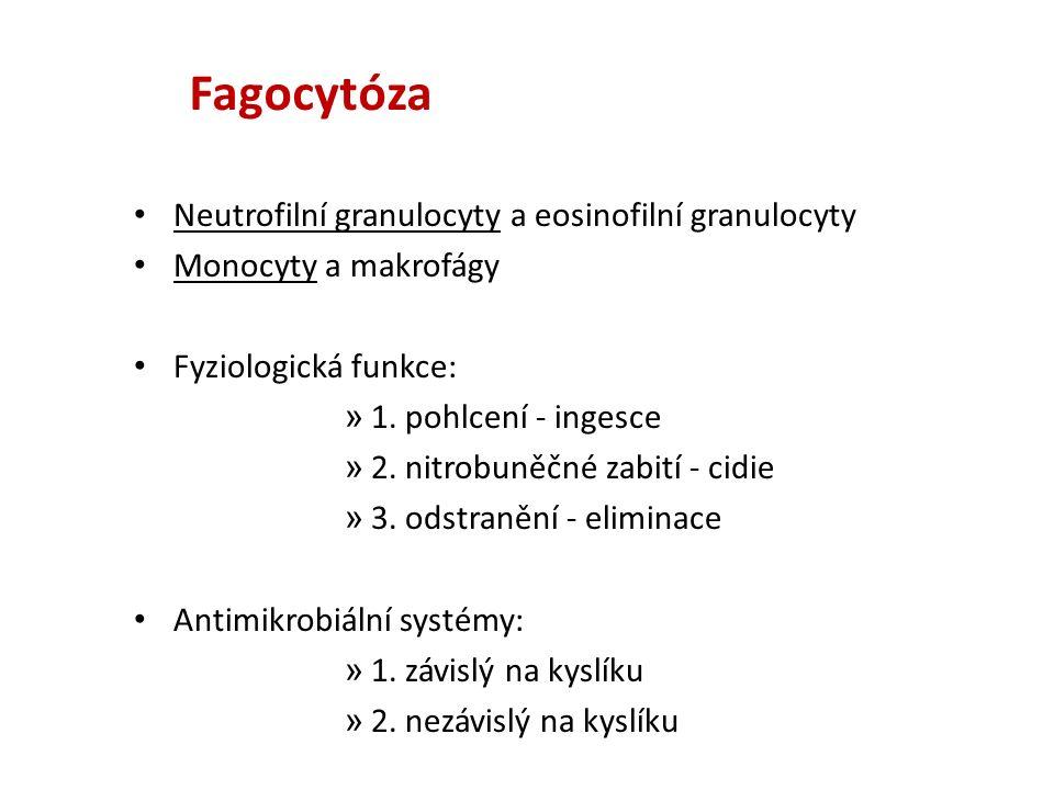 Zabíjecí mechanismy fagocytujících buněk 1.