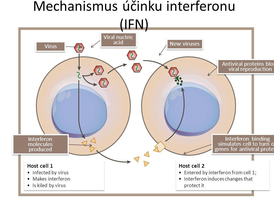 Cytokiny Uplatňují se v patogenezi: – atopických chorob (IL-4, IL-13 – stimulace tvorby IgE) – Zánětlivé choroby (TNF-  – Imunodeficity (defekt produkce IFN , IL-12) Ale lze je využít i terapeuticky – protinádorová léčba (IL-2, IFN-  ) – Léčba sklerózy multiplex (IFN-  – Léčba některých imunodeficitů (IFN- 