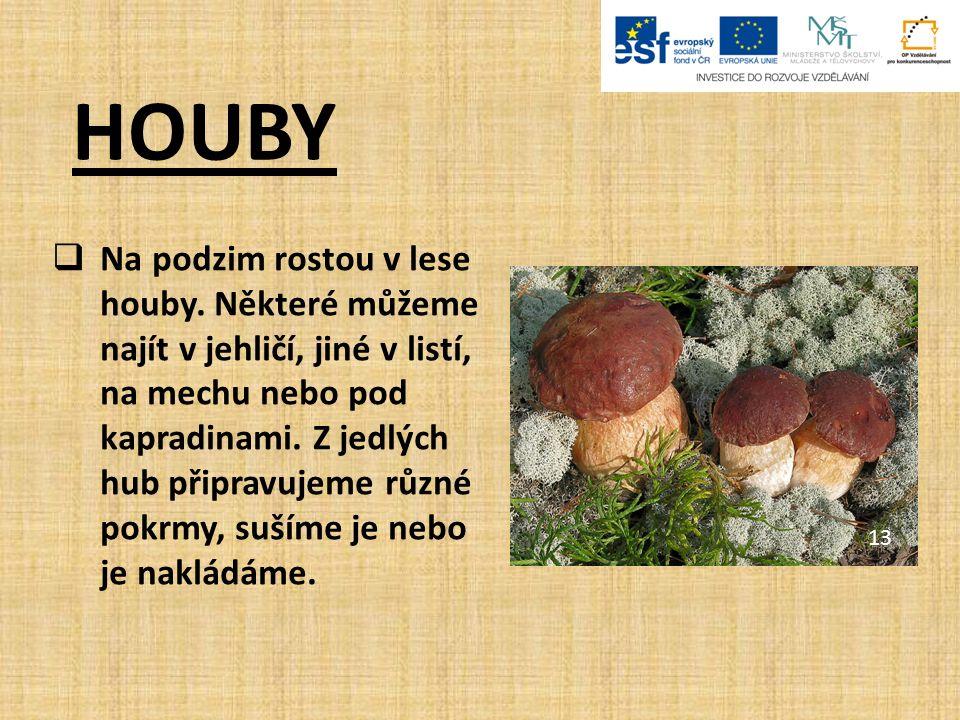 HOUBY  Houby tvoří samostatnou skupinu živých organizmů.