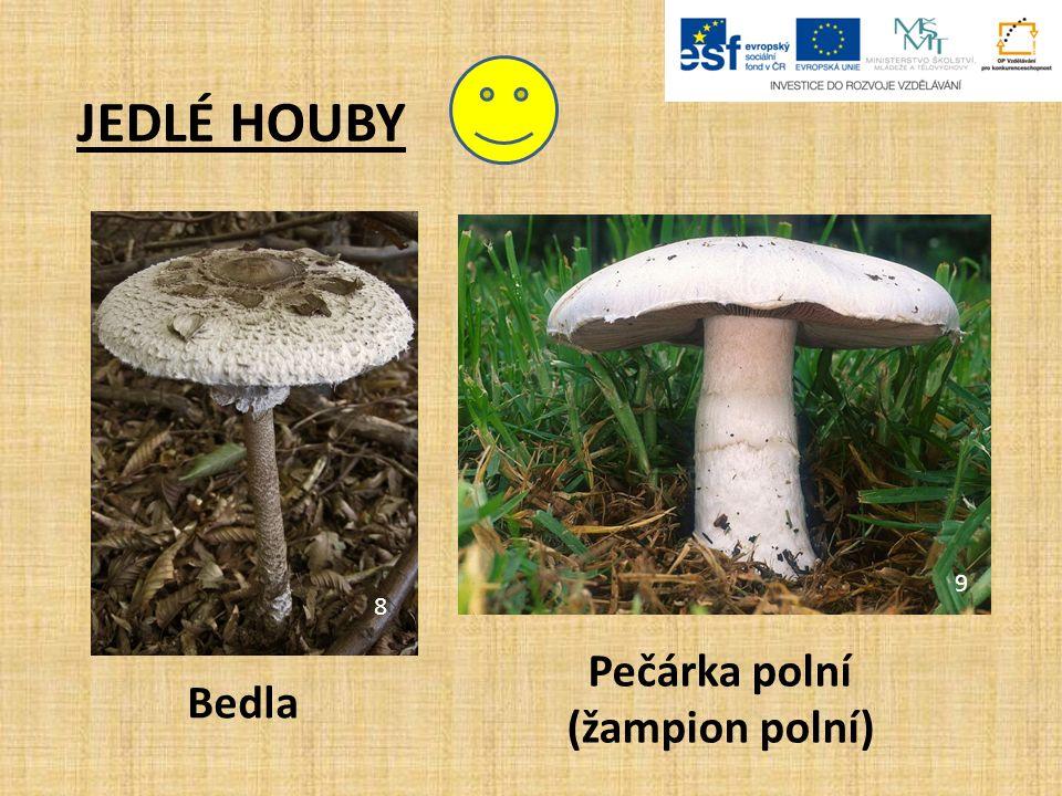 JEDOVATÉ HOUBY.Muchomůrky jsou jedovaté houby. Vyrůstají z měkkého váčku, který nazýváme pochva.