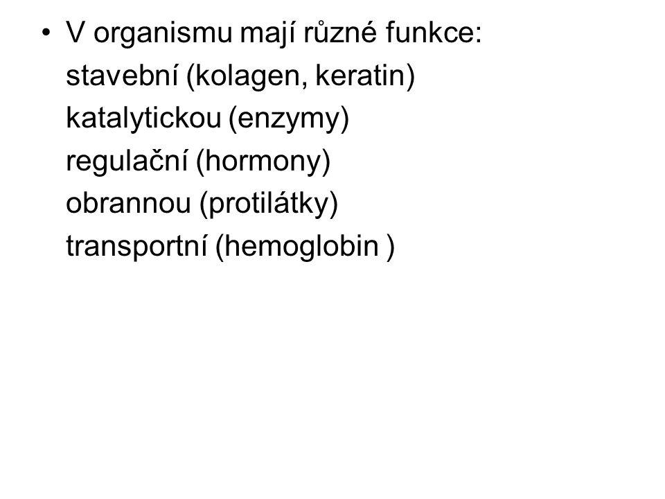 Bílkoviny dělíme: a/ jednoduché – jsou složené pouze z aminokyselin b/ složené – kromě bílkovinné složky obsahují ještě nebílkovinnou složku