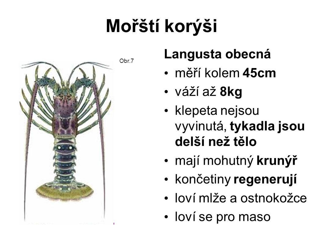 Mořští korýši Krabi oválný krunýř redukovaný zadeček 5 párů končetin nohy do stran první pár - mohutná klepeta většina je vodních loví se pro maso Velekrab japonský největší krab rozpětí klepet 3,5m tělo 60cm mořský živočich Obr.8