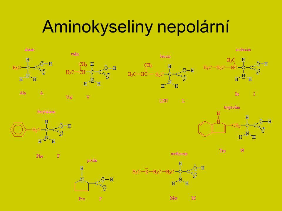 Aminokyseliny polární