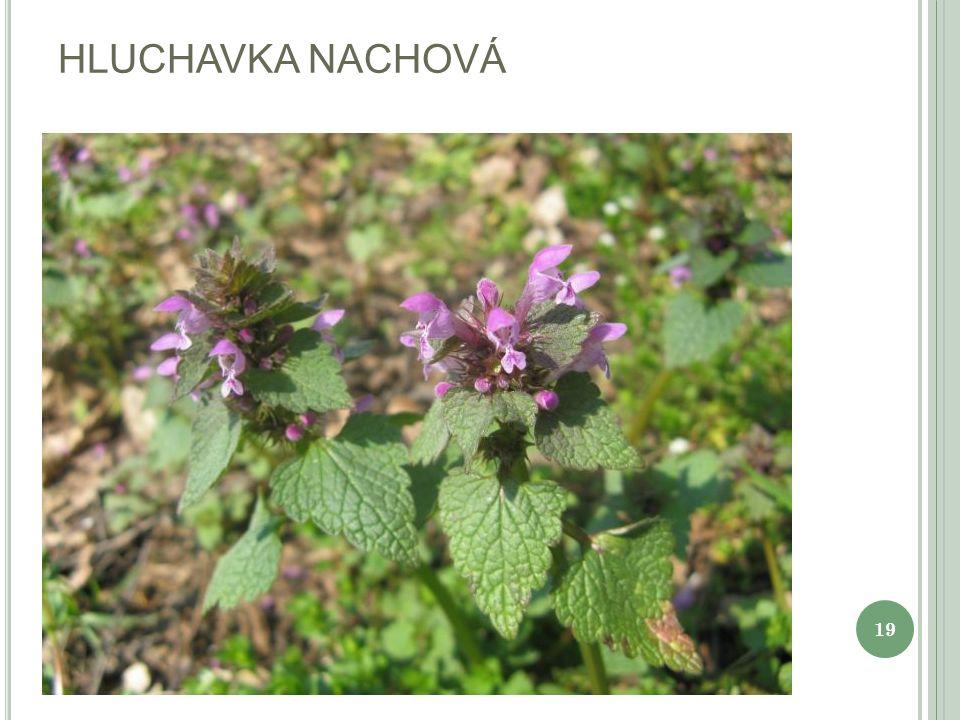 HLUCHAVKA SKVRNITÁ 20