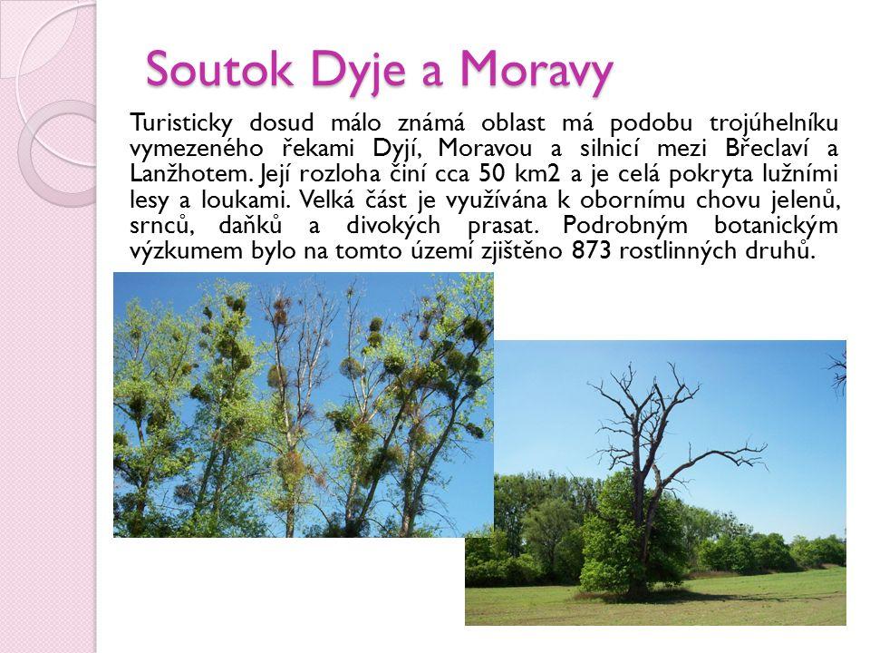 Nejcennější částí lužního lesa s porosty pralesovitého typu jsou chráněny v národních přírodních rezervacích Ranšpurk a Cahnov- Soutok.