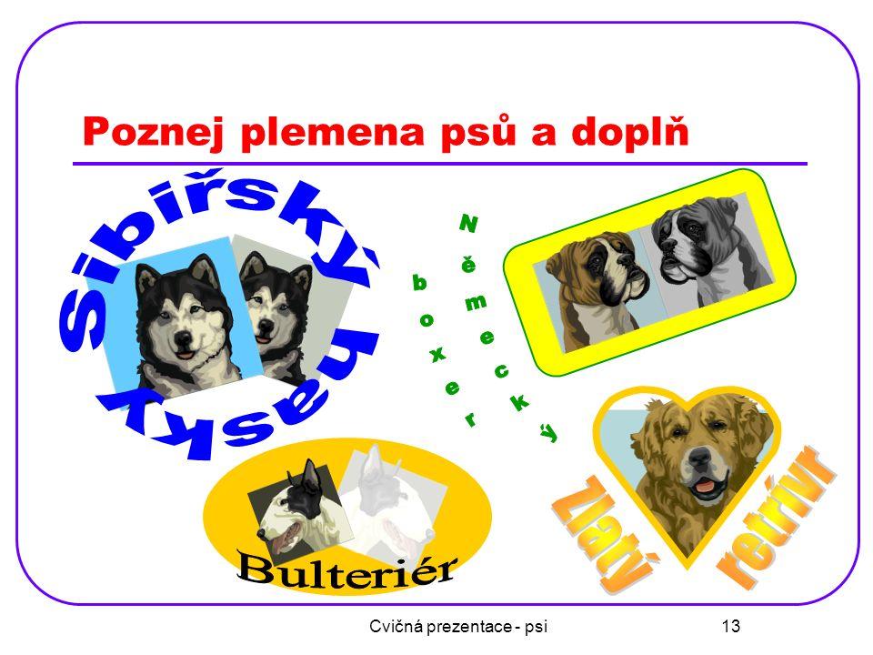 Cvičná prezentace - psi 14 Svatobernardský pes