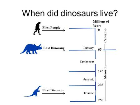 When did dinosaurs live? First Dinosaur Last Dinosaur Cretaceous First People Tertiary Jurassic Triassic Mesozoic Cenozoic 250 208 65 145 0 Millions of.