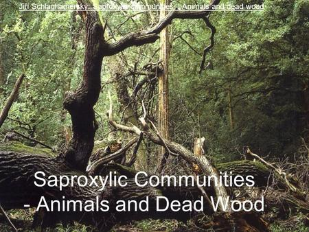 Saproxylic Communities - Animals and Dead Wood Jiří Schlaghamerský: Saproxylic communities – Animals and dead wood.