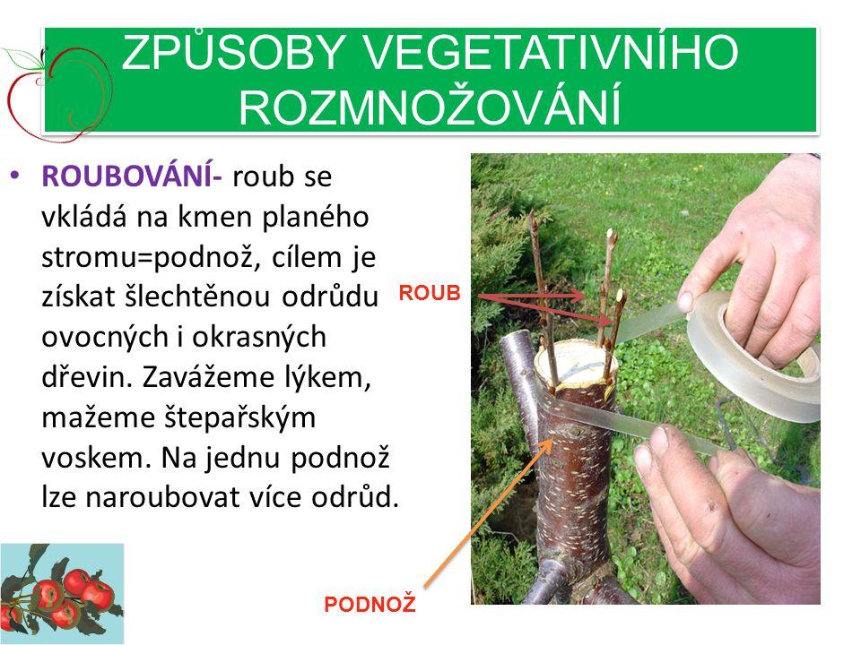 ZPŮSOBY VEGETATIVNÍHO ROZMNOŽOVÁNÍ • ROUBOVÁNÍ- roub se vkládá na kmen planého stromu=podnož, cílem je získat šlechtěnou odrůdu ovocných i okrasných dřevin.