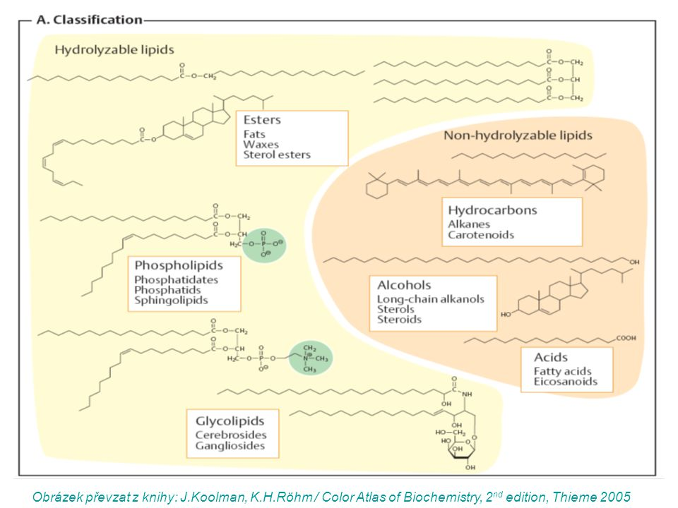 Strukturní složky lipidů alkoholy  glycerol (a)  sfingosin (b)  cholesterol (c)  inositol (d) karboxylové kyseliny (= mastné kyseliny) Obrázky převzaty z http://en.wikipedia.org (duben 2007)http://en.wikipedia.org a) b) c) d)