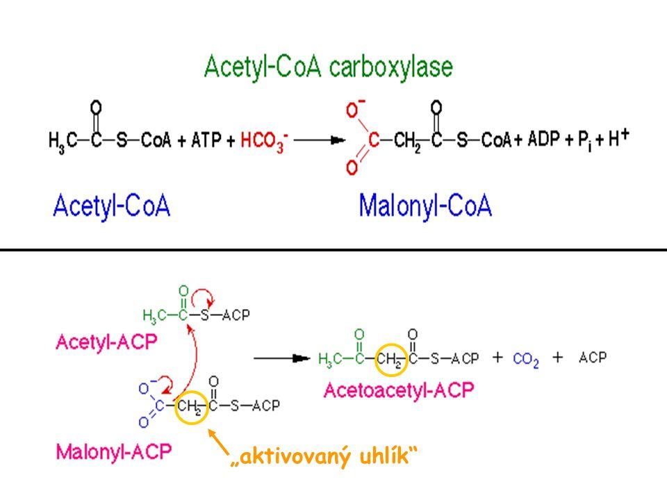 Obrázek převzat z http://web.indstate.edu/thcme/mwking/lipid-synthesis.html#synthesis (leden 2007)http://web.indstate.edu/thcme/mwking/lipid-synthesis.html#synthesis Transport acetyl-CoA z mitochondrie do cytoplazmy syntéza MK NADPH z pentózového cyklu