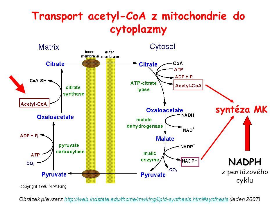 regulační enzymaktivaceinhibice acetyl-CoA karboxyláza (hlavní regulační enzym)  citrát  inzulin  nízkotučná, energeticky bohatá vysokosacharidová dieta (indukce)  acyl-CoA ( C 16 - C 18 )  glukagon (fosforylace, represe)  strava bohatá na lipidy, hladovění (represe) syntáza mastných kyselin  fosforylované sacharidy  nízkotučná, energeticky bohatá vysokosacharidová dieta (indukce)  glukagon (fosforylace, represe)  strava bohatá na lipidy, hladovění (represe) Regulace syntézy MK
