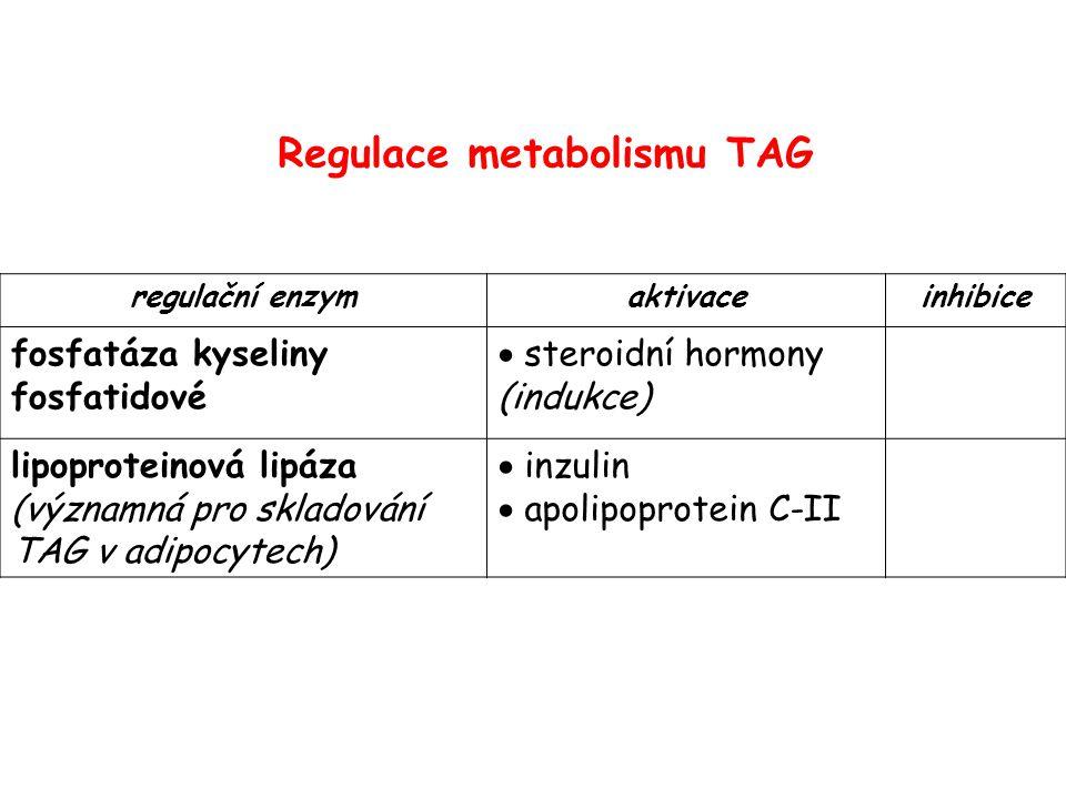 Biosyntéza cholesterolu Obrázek převzat z http://web.indstate.edu/thcme/mwking/cholesterol.html (leden 2007)http://web.indstate.edu/thcme/mwking/cholesterol.html regulační enzym!
