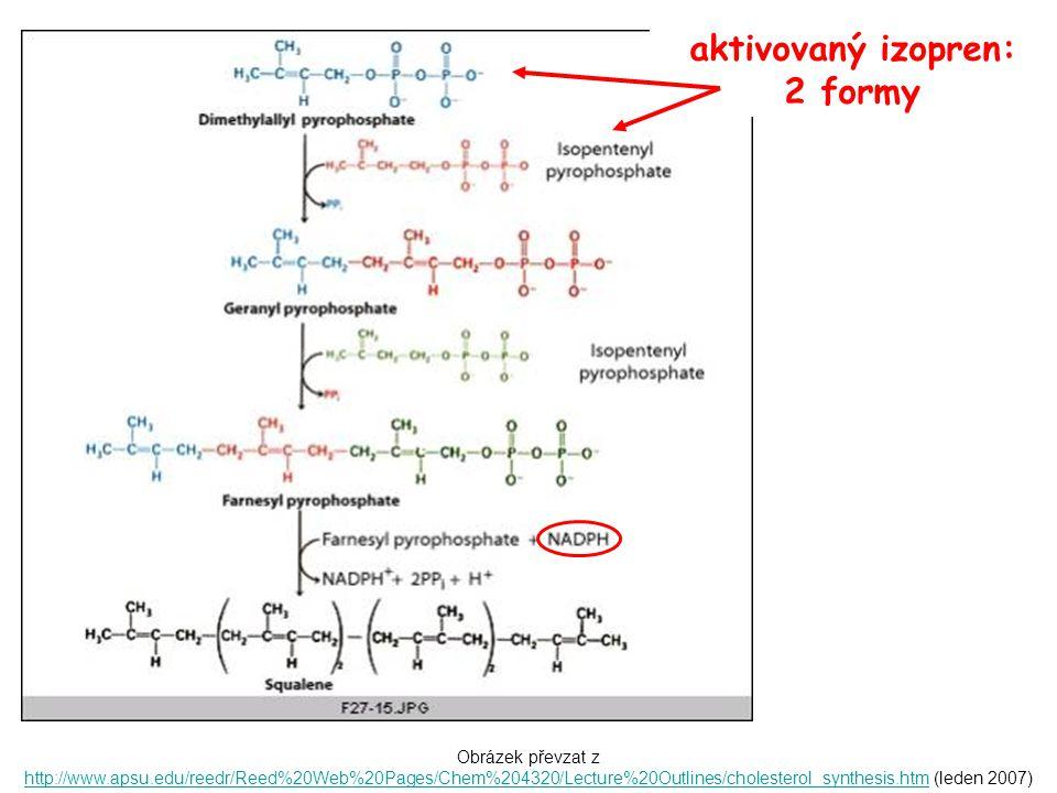 Obrázek převzat z http://www.apsu.edu/reedr/Reed%20Web%20Pages/Chem%204320/Lecture%20Outlines/cholesterol_synthesis.htm (leden 2007) http://www.apsu.edu/reedr/Reed%20Web%20Pages/Chem%204320/Lecture%20Outlines/cholesterol_synthesis.htm