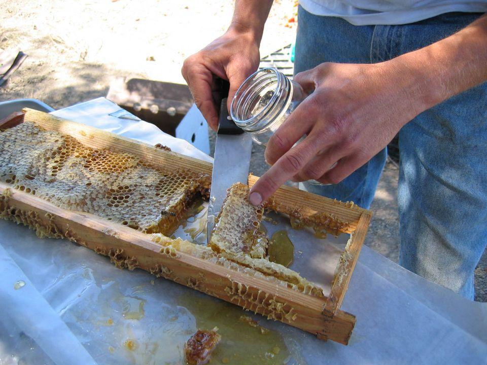 Složení medu velmi závisí na původu, druhu a kvalitě medu fruktóza (30-38%) glukóza (26-33%) sacharóza (1-10%) vyšší cukry (1-10%) voda (17-20%) bílkoviny (0,1-0,5%)