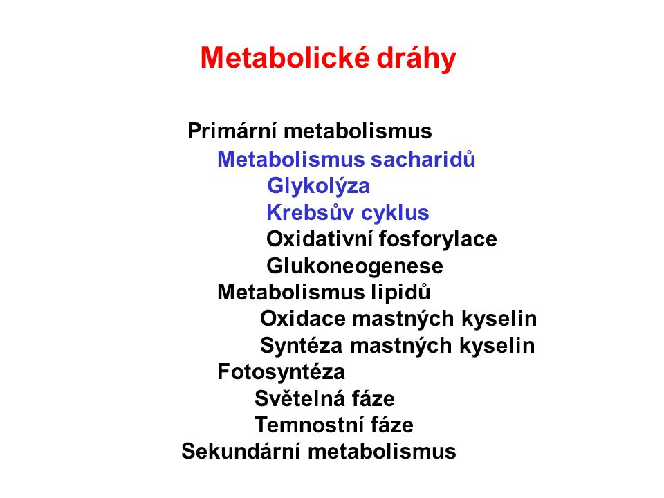 Metabolické dráhy Primární metabolismus Metabolismus sacharidů Glykolýza Krebsův cyklus Oxidativní fosforylace Glukoneogenese Metabolismus lipidů Oxidace mastných kyselin Syntéza mastných kyselin Fotosyntéza Světelná fáze Temnostní fáze Sekundární metabolismus