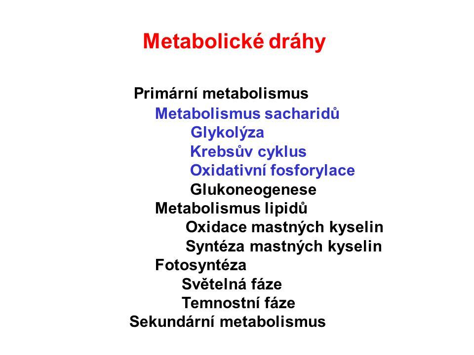BUŇEČNÁ RESPIRACE Glukóza 2 NADH 2 ATP 2 Pyruvát CytoplasmaMitochondrie 2 CO2 2 Acetyl CoA Krebs cycle 2 ATP 4 CO 2 34 ATP O2O2 H2OH2O H+H+ H+H+ H+H+ H+H+ H+H+ H+H+ H+H+ H+H+ H+H+ H+H+ Electron transportní řetězec Oxidativní fosforylace Max.