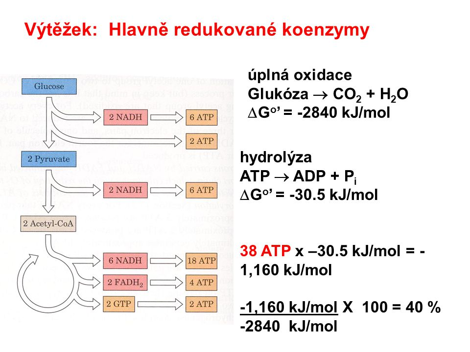 Metabolické dráhy Primární metabolismus Metabolismus sacharidů Glykolýza Krebsův cyklus Oxidativní fosforylace Glukoneogenese Fotosyntéza Světelná fáze Temnostní fáze Metabolismus lipidů Oxidace mastných kyselin Syntéza mastných kyselin Sekundární metabolismus