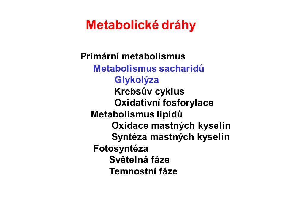Glykolýza : Čistý zisk na 6 uhlíků: 2 ATP 2 NADH 1.