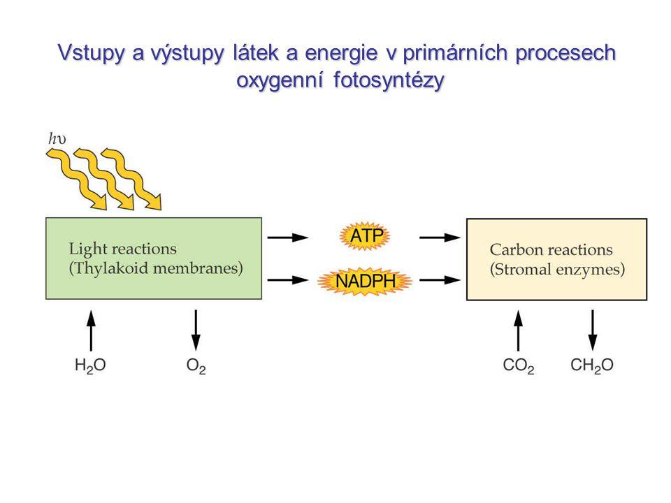 CO 2 + 2H 2 A  (CH 2 O) + 2A + H 2 O hh (1) Donor elektronůfoto.obecně: CO 2 + 2H 2 O  (CH 2 O) + O 2 + H 2 O hh (2) foto.