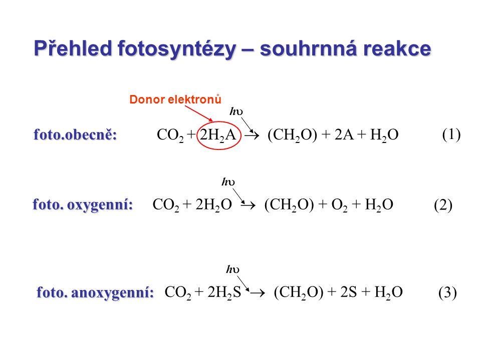 Primární procesy fotosyntézy Realizovány dvěma fotosystémy, které se vzájemně liší složením pigmentů Fotosystém I: absorbce dlouhovlnější záření v červené oblasti 700 nm, obsahuje karotenoidy, fykobiliny, chlorofyl a, chlorofyl b Fotosystém II: absorbuje krátkovlnější oblast záření 680 nm, obsahuje xantofyly, karotenoidy, fykobiliny, chlorofyl a, chlorofyl b