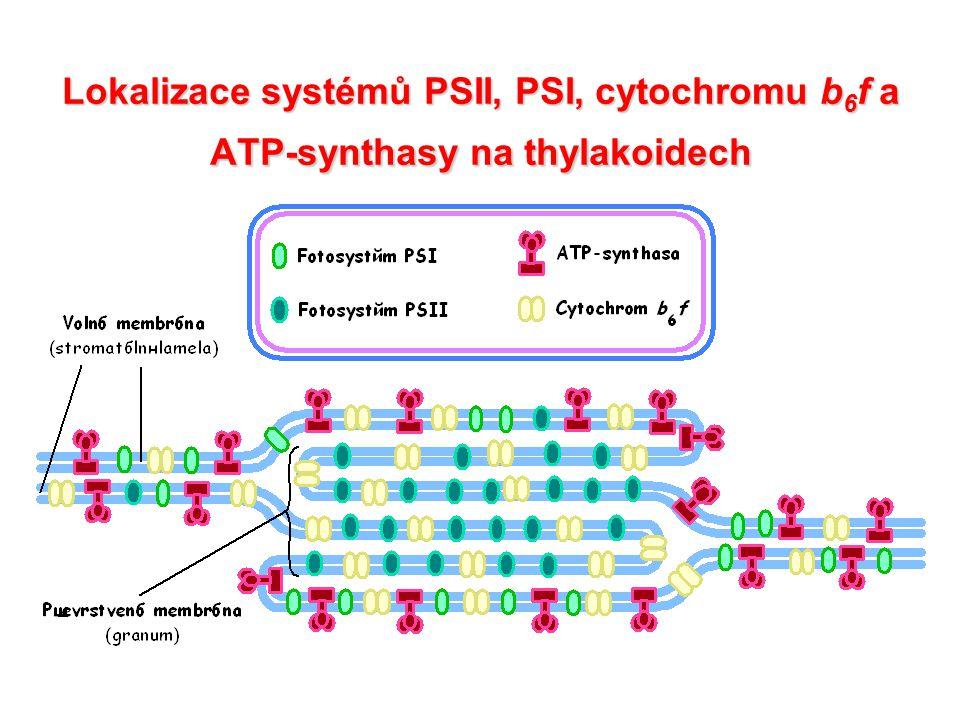 Plastochinon (Q) – plastochinol (QH2)