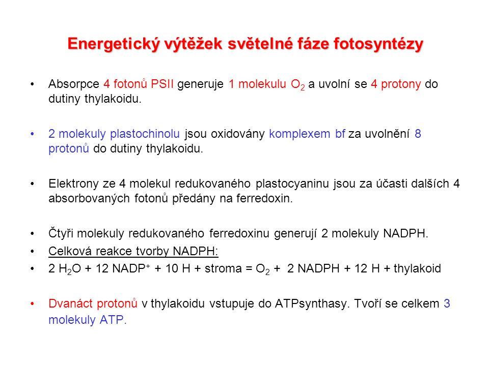Z-schéma světelné fáze fotosyntézy Elektrony mohou dosáhnout na ferredoxin-NADP+ reduktasu (FNR), která katalyzuje redukci NADP+.