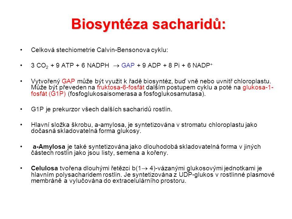 Syntéza škrobu.Celkově je reakce poháněna hydrolýzou PPi.