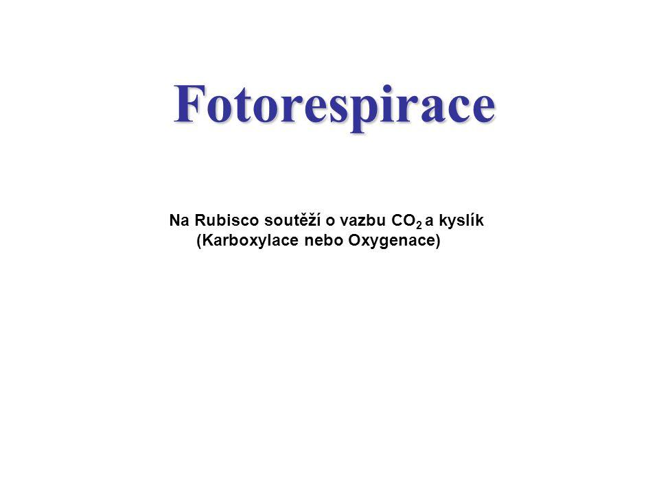 Oxygenasová reakce RUBISCA. Chloroplast – peroxisom (glyoxysom).