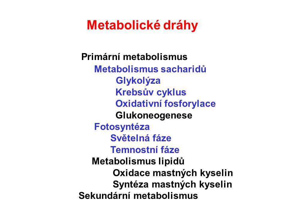 Metabolismus lipidů