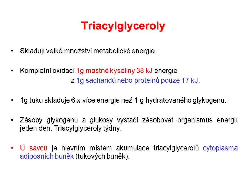 Katabolismus lipidů