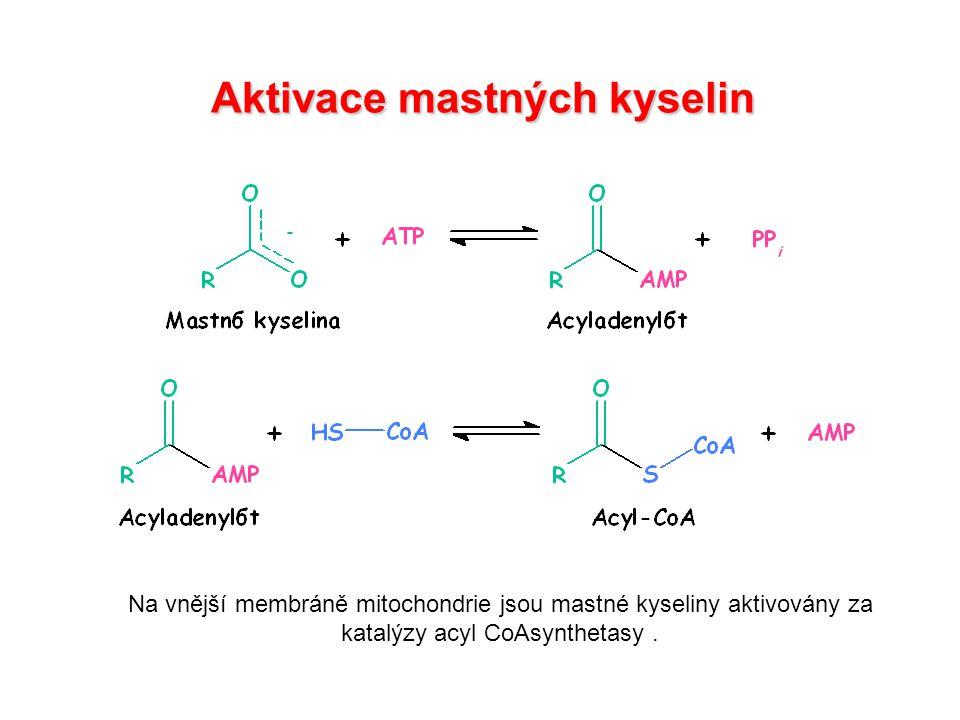 Transport aktivované mastné kyseliny do matrix mitochonodrie karnitinacyltransferasa I.