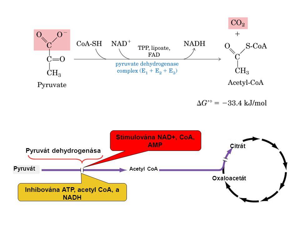 1.Kondensace 4C 2. Oxidativní dekarboxylace na 5C 3.