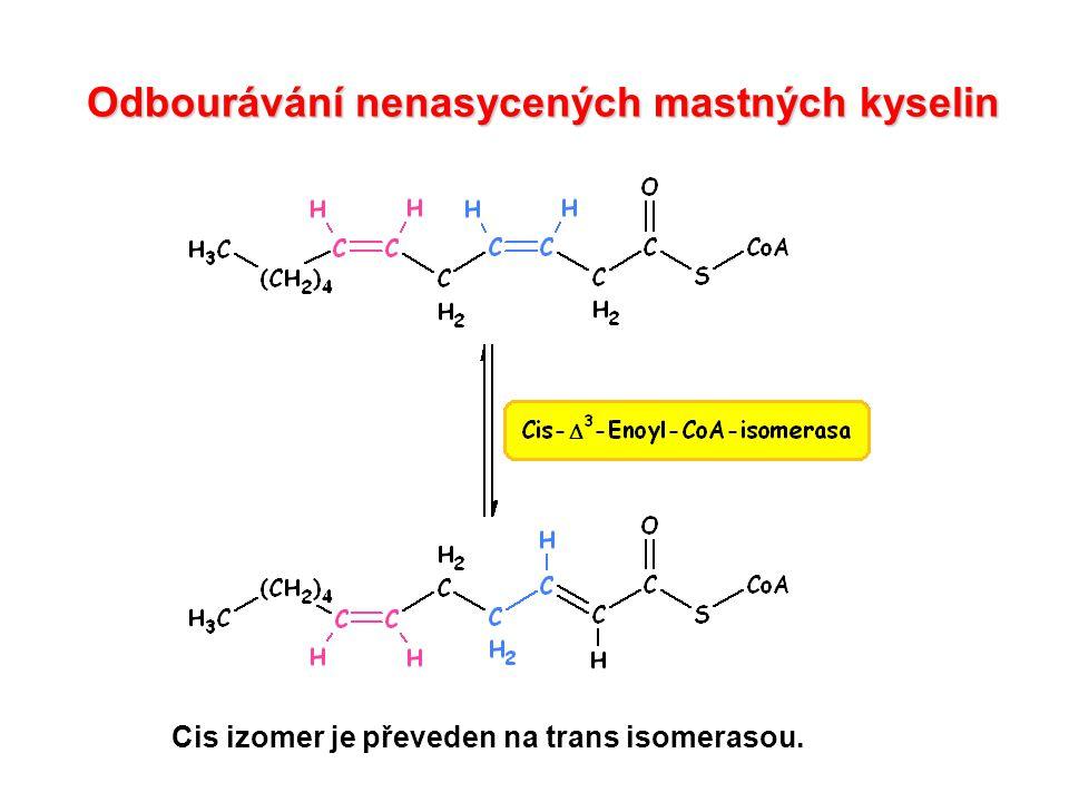 Odbourávání mastných kyselin s lichým počtem uhlíků Převedení L-methylmalonyl CoA na sukcinyl CoA probíhá za účasti enzymu methylmalonyl CoA mutasy jehož koenzymem je derivát vitaminu B 12 – kobalamin.