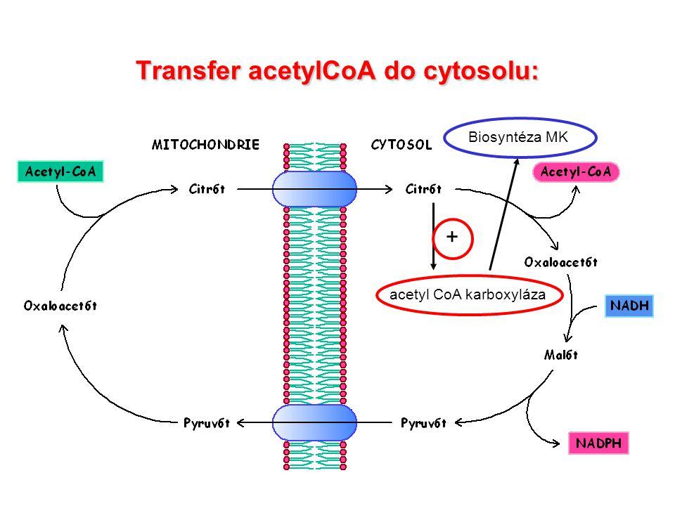 Anabolismus lipidů