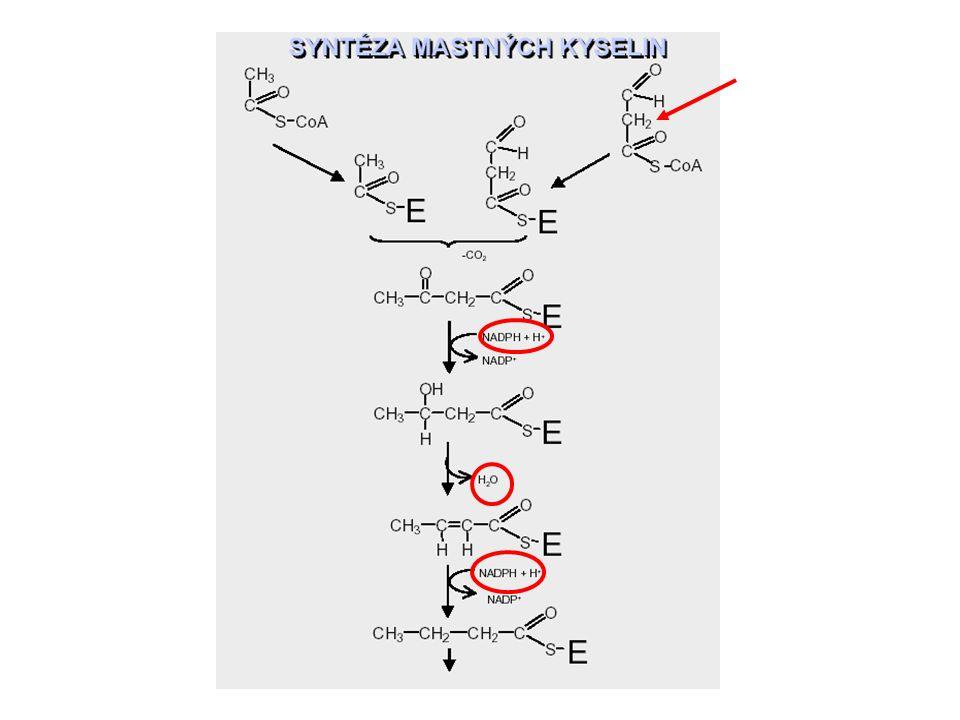 Rozdíly mezi odbouráváním a syntézou mastných kyselin 1.
