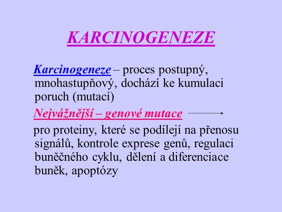 KARCINOGENEZE -vznik poruch v kritických genech maligní transformace buňky -čím větší počet karcinogenních činitelů, tím větší je riziko onkologických onemocnění -je-li porucha některého genu vrozená (geneticky podmíněná) – karcinogeneze může být značně urychlena