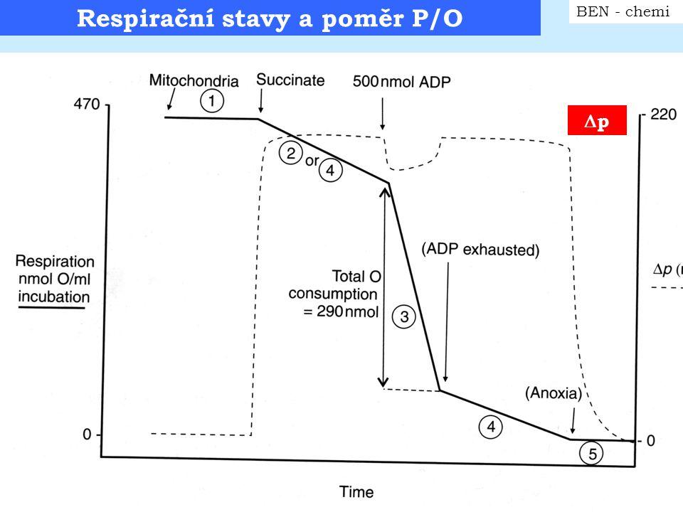 Protonová vodivost BEN - chemi Protonová konduktance membrány C M H + = J H+ /  p * ústřední parametr chování daného MTCh preparátu Příklad: jaterní MTCh ve stavu 4 – oxidace sukcinátu 1) Typické hodnoty: 15 nmol 0 2 min -1 mg -1,  p = 220mV, H + /O = 6 2) Po přidání ionoforu FCCP - pokles  p na 40mV, nárůst respirace na 100nmol O 2