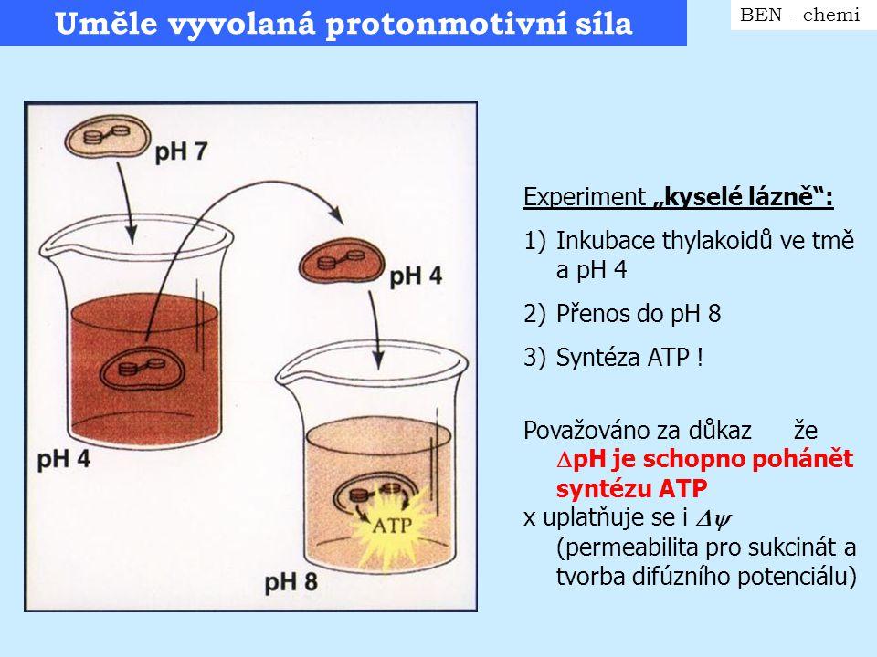 """Princip """"kyselé lázně BEN - chemi - Pro podobný experiment s MTCH nebo bakteriemi je potřeba ionofor pro kompenzaci náboje"""