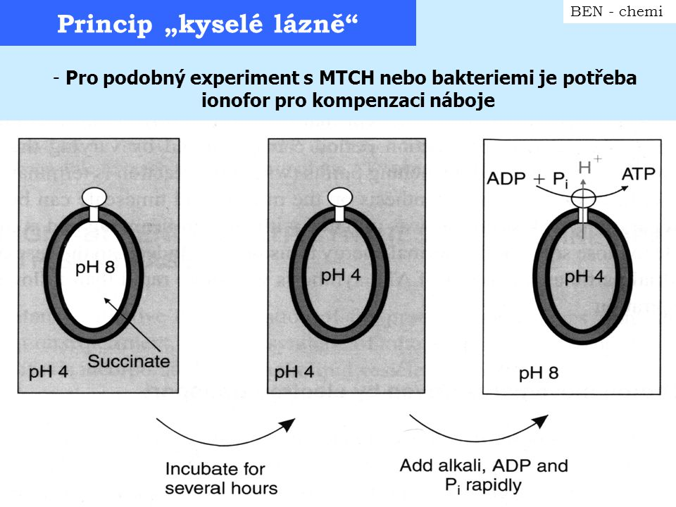 Rekonstituce protonového obvodu BEN - chemi světlem-poháněna protonová pumpa