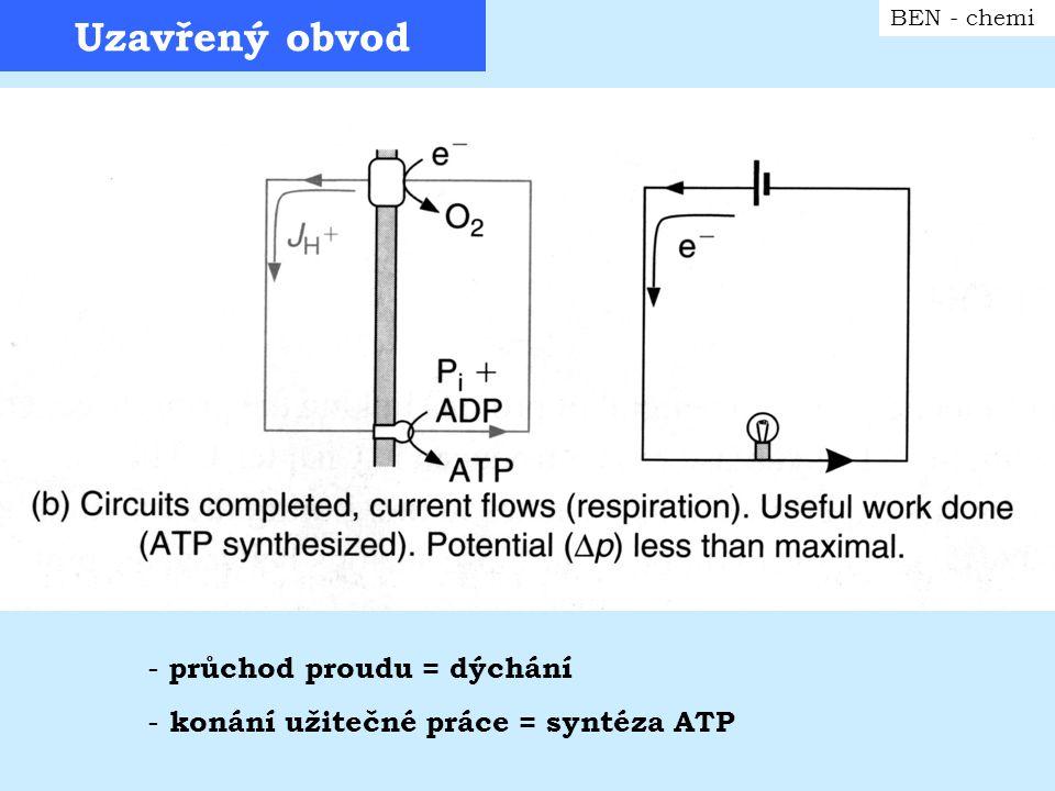 Zkratovaný obvod BEN - chemi - rozptyl energie ve formě tepla - nízký potenciál x nejintezivnější dýchání