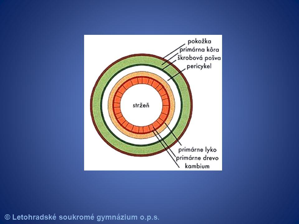 Pupeny stonku - Stonek na sobě nese pupeny ( pupen = základ budoucích rostlinných orgánů ) - Dřevní pupeny = Vyrůstají z nich nové větévky.