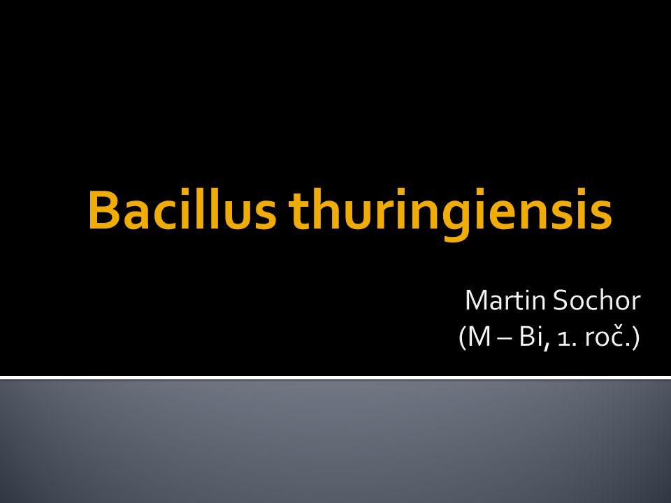  taxonomie:  doména: Bacteria  kmen: Firmicutes  třída: Bacilli  řád: Bacillales  čeleď: Bacillaceae  rod: Bacillus  grampozitivní  půdní  tvorba spor