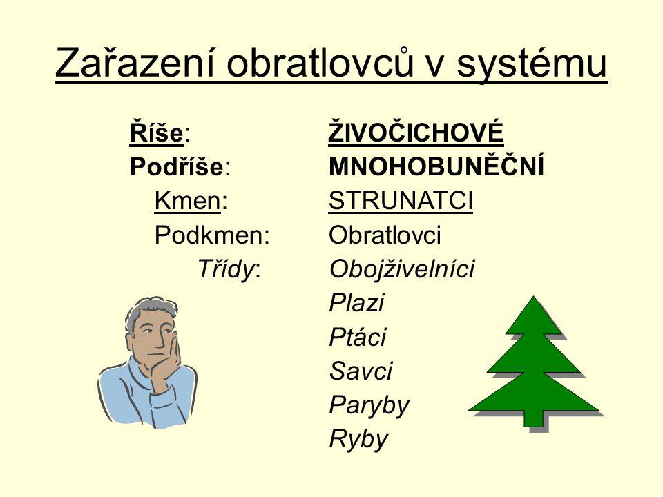 Největší skupiny savců v lese 1.Sudokopytníci 2.Šelmy 3.Hmyzožravci 4.Hlodavci